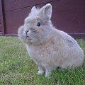 #zwierzątka #króliczek