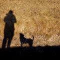 pies prosi #pies #natura #cień