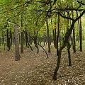 #las #ścieżka