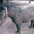 #koń #konie #kobyła #kuc #kucyk #zwierzę #zwierzęta
