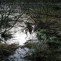 #woda #blask #przyroda #jeziorko #jezioro #trawa
