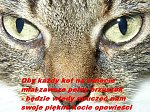 http://images34.fotosik.pl/146/de96ad95c283e828m.jpg