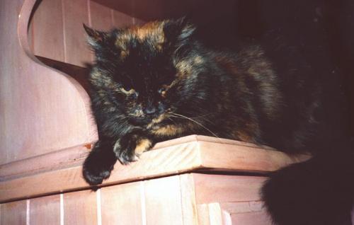 Esmeralda, pseudonim: Mucha Burbucha. Foto moja córka