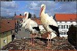 http://images34.fotosik.pl/167/c4d333f1e26fab7fm.jpg
