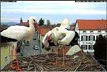http://images34.fotosik.pl/168/07ccebd05ffe437bm.jpg