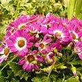 #kwiat #piękny #natura