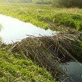 #Opoczno #rzeka #przyroda
