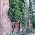 Malbork #drzewa #mur #zamek