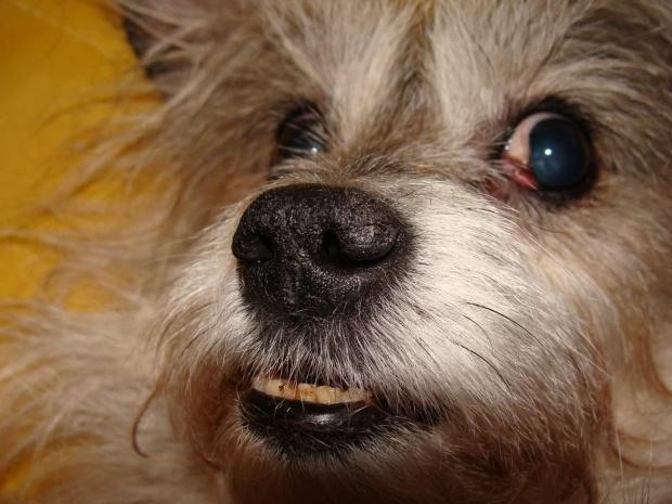 ...LOL... #pies #piesek #pieseczek #piesio #zwierzęta #kudłaty #pikuś