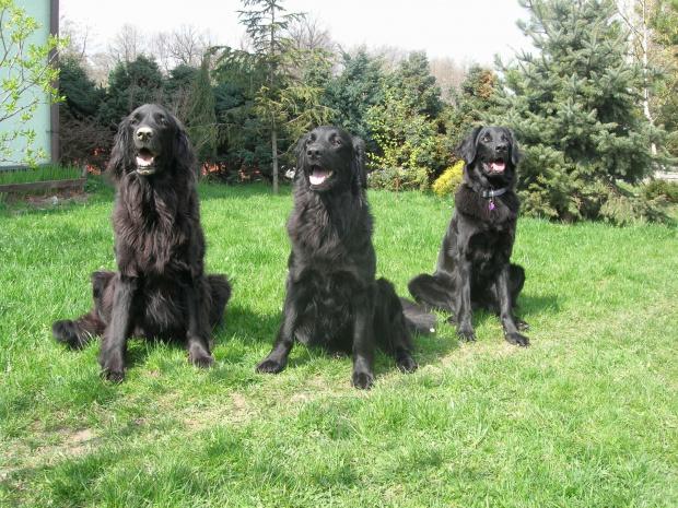 U mamy Oli :) Kolejno od lewej: Jaga mama, Moja Mała i Jaga Juniorka