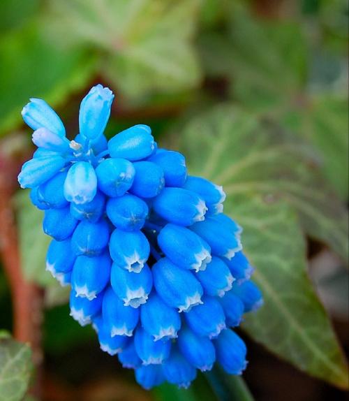 Jaka wiosna takie kwiaty:(( -zimno i deszcz-