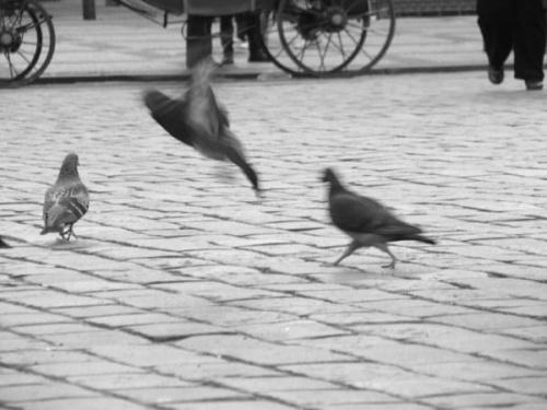 #gołębie #Praga #RynekStaregoMiasta