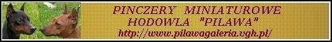 Hodowla Pinczerów Miniaturowych Pilawa