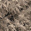 Smutne liście #liść #liście #wiatr