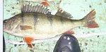 images34.fotosik.pl/266/ea6acbc6c4718a81m.jpg