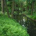 zielono mi:) Łazienki Królewskie w Warszawie #ŁazienkiKrólewskie #zieleń #przyroda #ŁonoNatury #rzeczka #drzewa #zielony