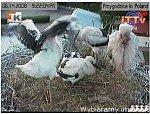 http://images34.fotosik.pl/286/a17721ab8bc34d51m.jpg