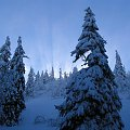 poświata #poświata #zima #nadzieja #promienie #śnieg #zimno #słońce #świt #blask