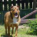 Mój piesek rasy kundel mieszany :P #pies #kundel #suka #zwierzę