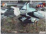 http://images34.fotosik.pl/302/5655b098f9b595a8m.jpg