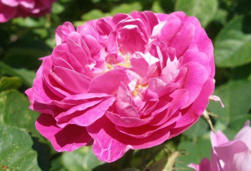 psychodeliczność tej róży przyprawia mnie o zawroty głowy i szał emocji :)
