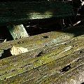 Znowu zdjęcie ławki. Tu widać liść na pierwszym planie oraz stare i zarośnięte mchem deski. #ławka #liść