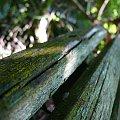 Jedno z sesji zdjęciowej ławki, którą mam u siebie w ogrodzie. #ławka #drewno