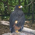 Kolejny stwór który lubi się chwalić co umie #Zwierzęta #Zoo #Ptak #Drapieżnik #Poza