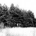 #drzewa #las #pola