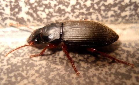 #owady