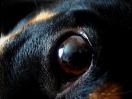 #zwierzęta #pies