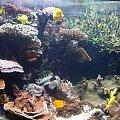 Podwodny Świat... #akwarium #rybka #zwierzątka