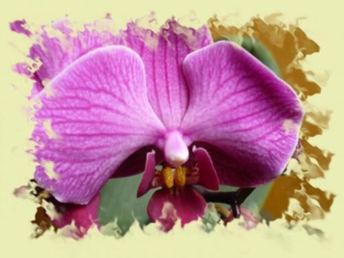 storczyk #kwiaty #przyroda