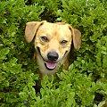 na jagodach :) #przyroda #jagody #zwierzęta #pies #jodłów