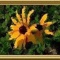 Z mojego ogrodu, te wrześniowe, piękne! #namalowane #PSP #MojePrace #kwiaty