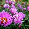 #kwiaty #marcinki #ogród