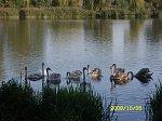 http://images34.fotosik.pl/374/1fb4d4de5f2ee23cm.jpg