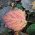 płomień #Puszcza #jesień