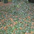 Jesień w Parku Szczytnickim #jesień #las #liście #przyroda #Wrocław #ParkSzczytnicki