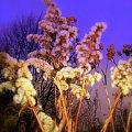 Grudniowa łąka #Łąka #trawy #grudzień