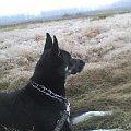 grudniowe spacery - tymi klejnotami obsypana była cała łąka #pies #psy #zwierzęta #przyroda #zjawiska