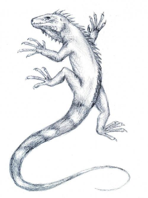 Legwan rysunek ołówkiem autor Gosia
