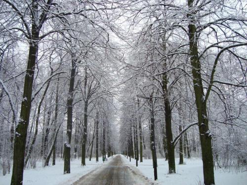 zimowo #park #snieg #śnieg #zima #drzewa