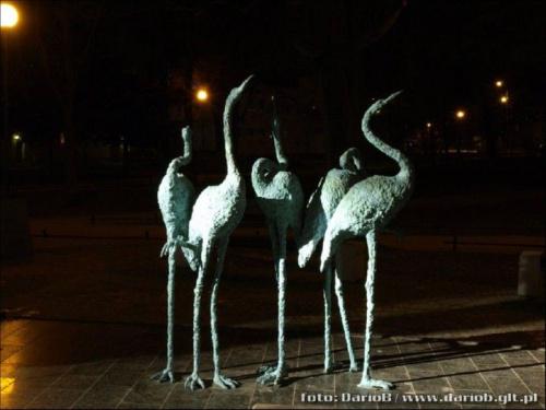 Flamingi #Flamingi #czaple #ptaki #AkademiaRzygaczy #zoo #WolneForumGdańsk