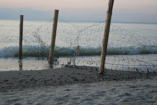 Plaża #natura #przyroda #zwierzęta