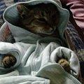 Moje zwierzaki #kot #kotka #pies #suczka #zwierzaki #zwierzęta