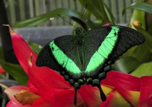 motylkowo... #motyl #owad #evasaltarski