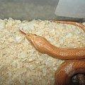 #zwierzęta #gady #węże