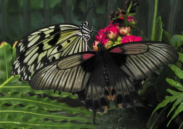 """Spotkanie przy """"kieliszku"""" ...:) #evasaltarski #motyl #owad"""