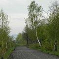 #natura #przyroda #drzewa #brzoza #droga